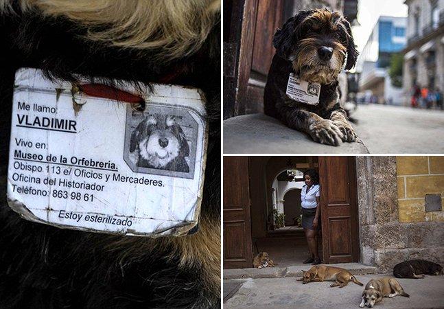 O que podemos aprender com a forma como Cuba trata seus animais de rua