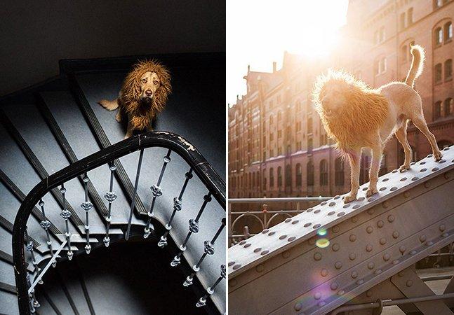 Cachorro encontrado no lixo vira leão em ensaio fotográfico que exalta a sua coragem