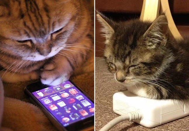 A tecnologia mudou muito a nossa vida  e também a dos gatos; veja como