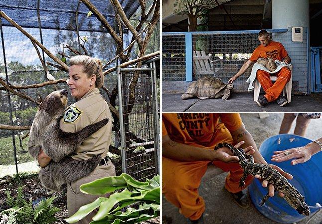 A incrível prisão onde detentos e animais abandonados ganham uma segunda chance
