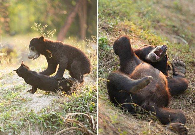 Filhote de urso que não era para ter nascido vira animal feliz junto do seu melhor amigo: um gato