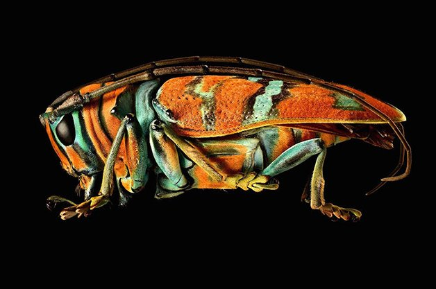 MacroInsect4