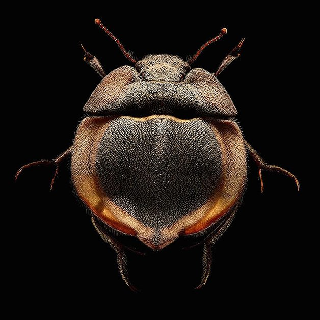 MacroInsect5