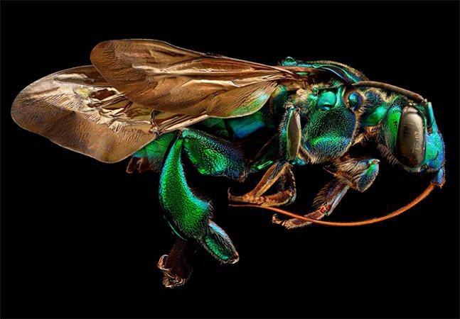 Fotógrafo usa lente de microscópio e une 10 mil fotos pra criar impressionantes imagens de insetos