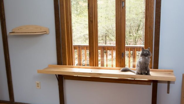 Massachusetts-Home-Transformed-into-Cats-Paradise-57053824237cf__880