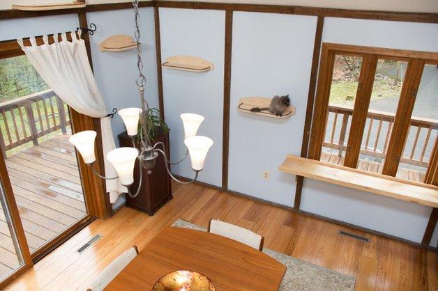 Massachusetts-Home-Transformed-into-Cats-Paradise-5705382fbfde3__880