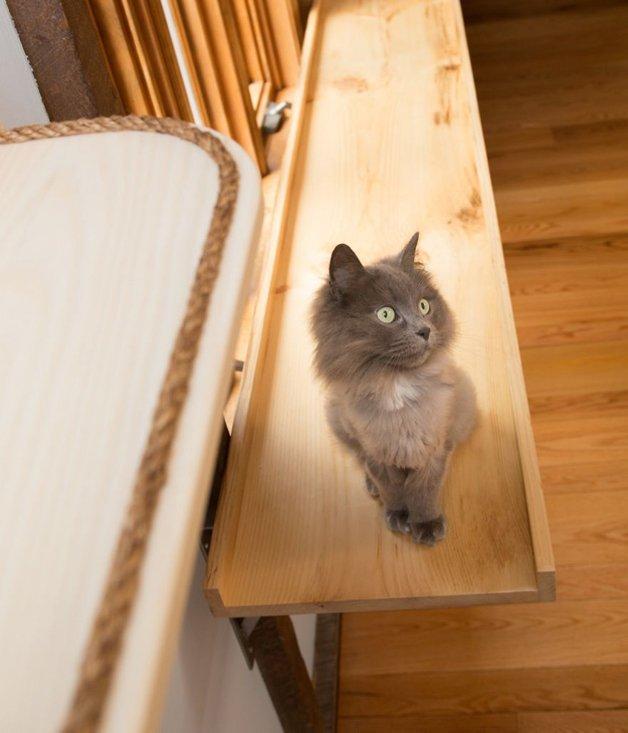 Massachusetts-Home-Transformed-into-Cats-Paradise-57053849edffc__880