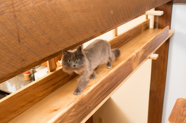 Massachusetts-Home-Transformed-into-Cats-Paradise-570538dcdd89f__880