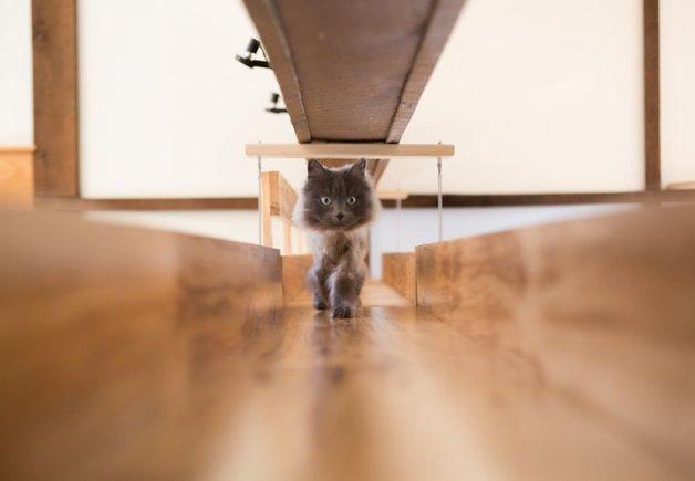 Massachusetts-Home-Transformed-into-Cats-Paradise-570538e427a8d__880