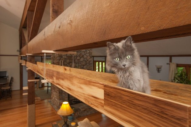 Massachusetts-Home-Transformed-into-Cats-Paradise-570539226a1b4__880