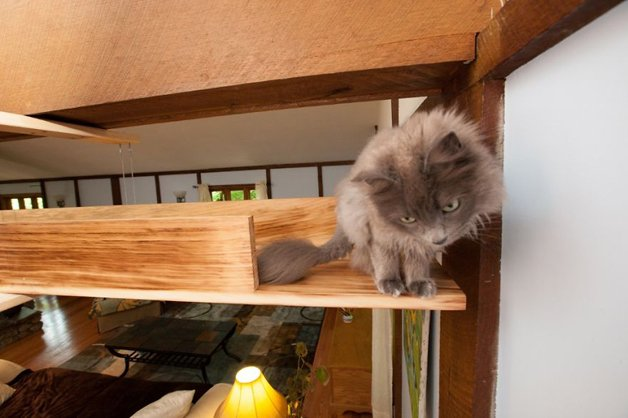Massachusetts-Home-Transformed-into-Cats-Paradise-5705392e07254__880