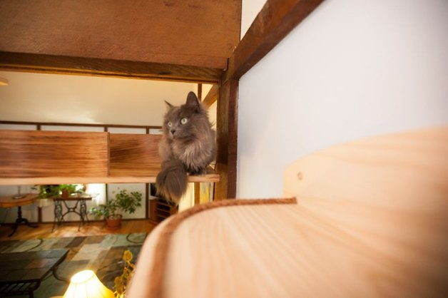 Massachusetts-Home-Transformed-into-Cats-Paradise-570539415bd70__880