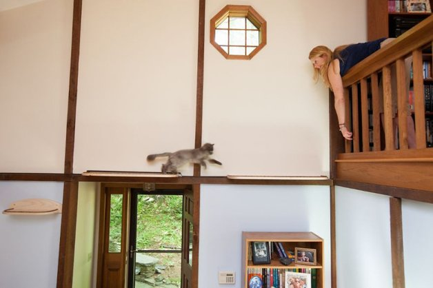 Massachusetts-Home-Transformed-into-Cats-Paradise-5705397407bd9__880