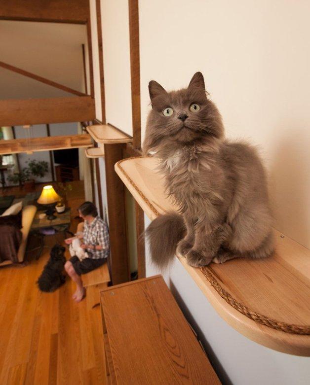 Massachusetts-Home-Transformed-into-Cats-Paradise-5705397aa986e__880