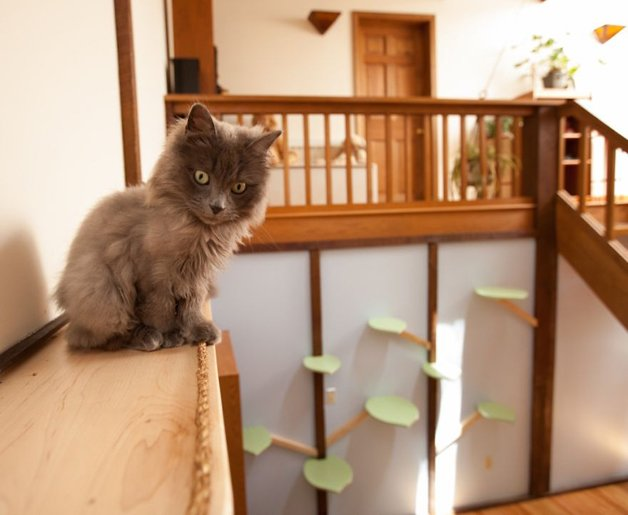 Massachusetts-Home-Transformed-into-Cats-Paradise-570539833a562__880