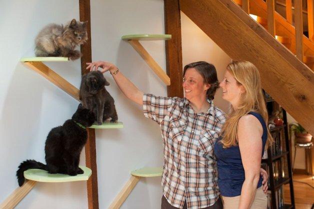 Massachusetts-Home-Transformed-into-Cats-Paradise-57053997d7d21__880