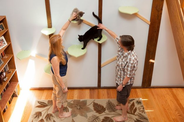 Massachusetts-Home-Transformed-into-Cats-Paradise-570539be871bc__880