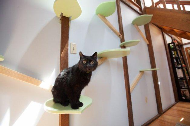 Massachusetts-Home-Transformed-into-Cats-Paradise-57053b586d77d__880