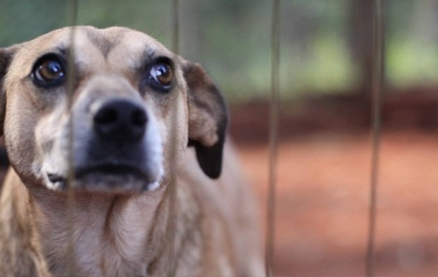 ajude-salvar-os-animais-abandonados-16541