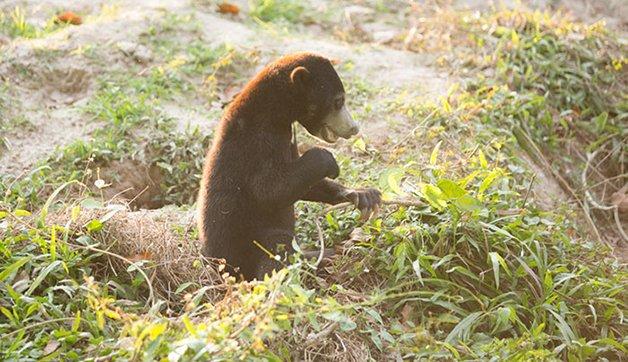 bear-cat-friends-unusual-animal-friendships-ka-wao-george-1