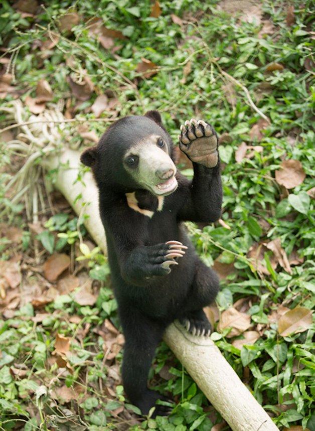 bear-cat-friends-unusual-animal-friendships-ka-wao-george-10