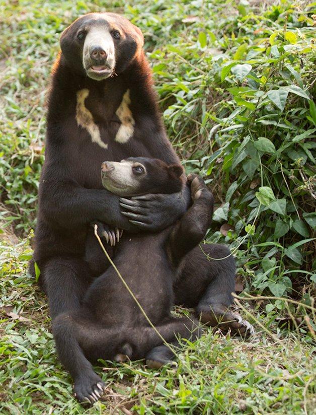 bear-cat-friends-unusual-animal-friendships-ka-wao-george-8