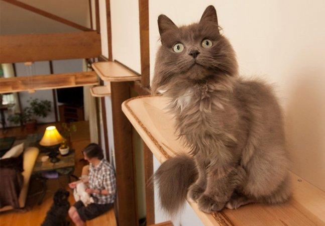 Esta casa foi inteira adaptada  para os 7 gatos que vivem nela