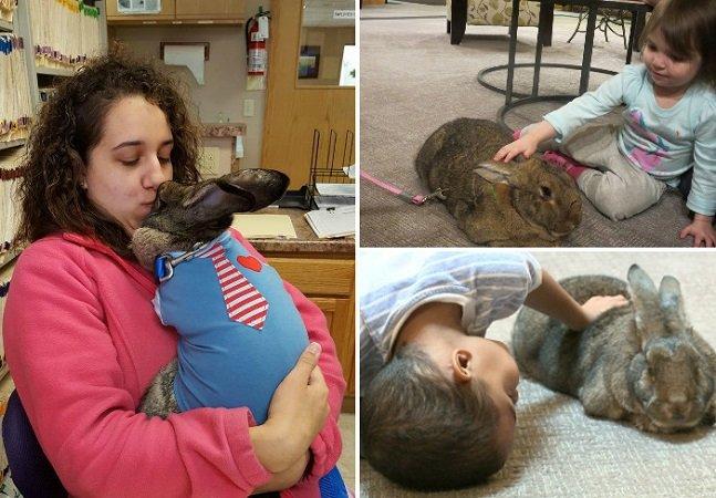 Como coelhos gigantes estão ajudando pessoas a superar seus traumas