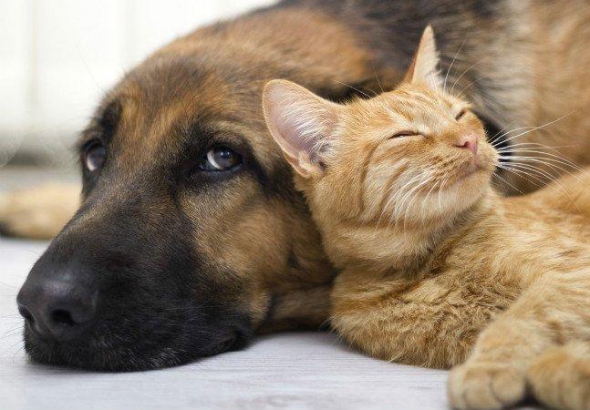 Cidade do Paraná aprova desconto no  IPTU para quem adota cães e gatos
