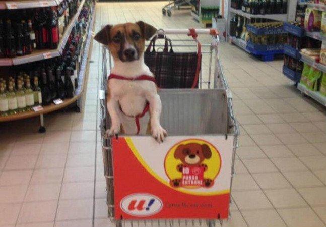 """Mercado cria carrinho especial para que cachorros """"façam compras"""" junto com seus donos"""