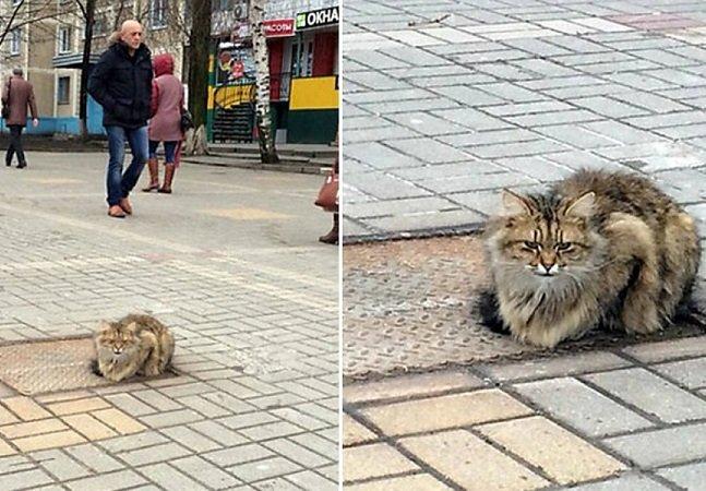 Abandonado, gatinho espera seus  donos há um ano no mesmo lugar