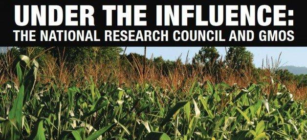 Sob influência: o Conselho Nacional de Pesquisas e os OGMs