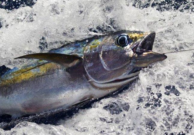 Como o Greenpeace está  lutando contra a maior  empresa de atum do mundo