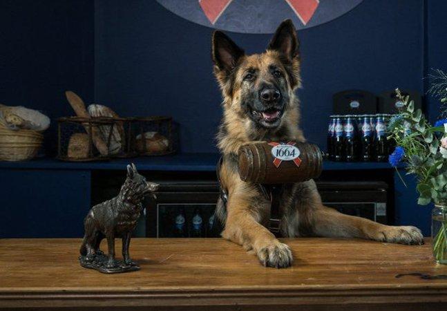 Nesse bar de Londres, cachorros  servem cerveja no lugar dos garçons