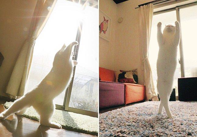 Este gato dança balé como um profissional e está conquistando a internet