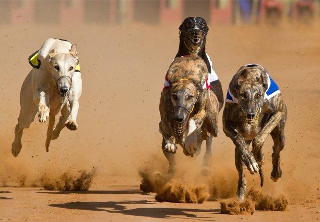 Corrida de cães está pouco a  pouco sendo banida nos EUA