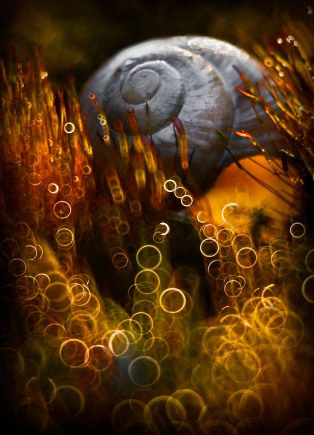 In-My-Wonderland-572899b1cd584__880