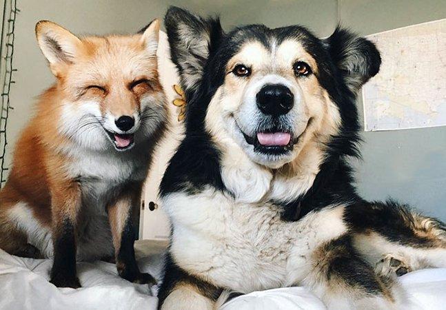 A improvável (e adorável!) amizade entre uma raposa e um cachorro que conquistou a internet