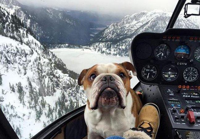 Buldogue inglês vira copiloto e faz sucesso na web com suas incríveis aventuras de helicóptero