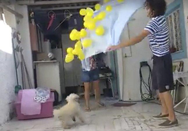 Alegria nas coisas simples: cadelinha comemora aniversário com o melhor presente possível