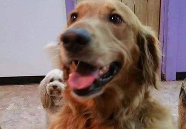 Este cachorro fugiu de casa para  visitar os amigos num spa canino