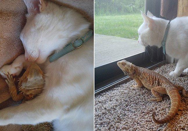 A improvável amizade entre uma iguana e um filhote de gato