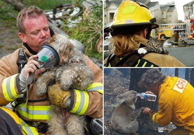 10 casos emocionantes mostram que não são apenas vidas humanas que os bombeiros salvam