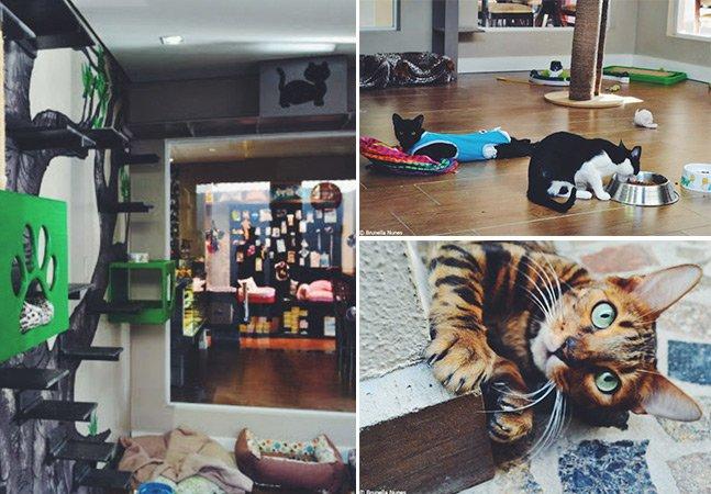 Roteiro Hypeness: conheça o Café com Gato, o primeiro cat café do Brasil