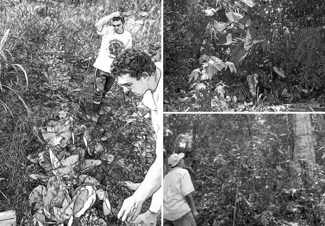 Manual ensina passo-a-passo como plantar uma agrofloresta