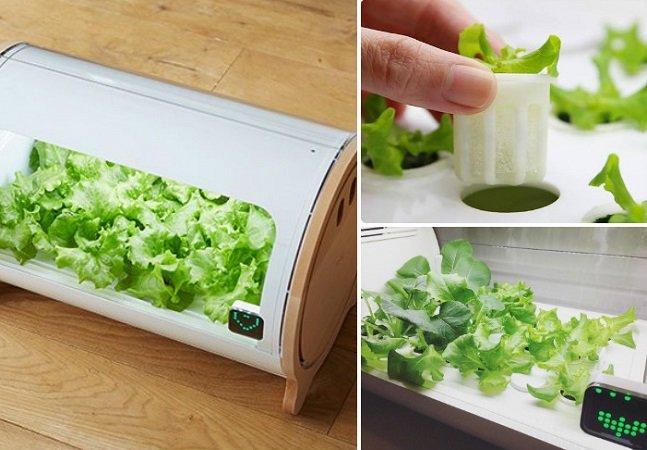 Empresa lança miniestufas digitais que tornam possível plantar vegetais em casa
