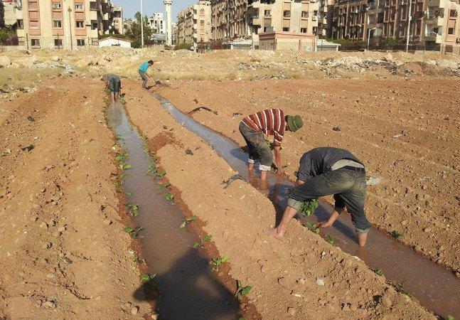 Como hortas urbanas estão ajudando pessoas a sobreviver durante a guerra na Síria