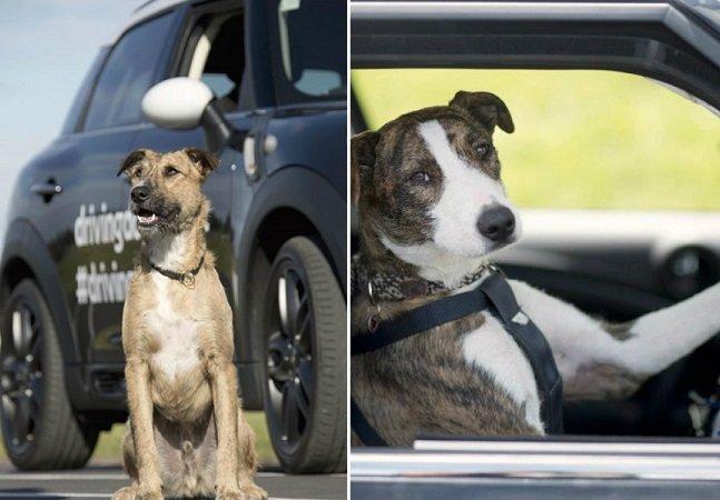 Cachorros em busca de um lar aprendem a dirigir pra alertar sobre adoção e mostrar como são inteligentes