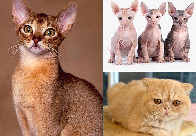 Curitiba recebe um dos maiores  eventos de gato do país