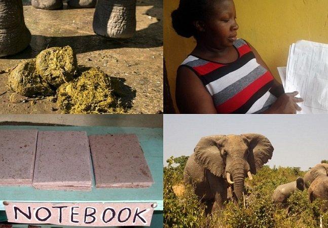 Papel de fezes de elefante  ajuda a combater o desmatamento  e preservar a espécie